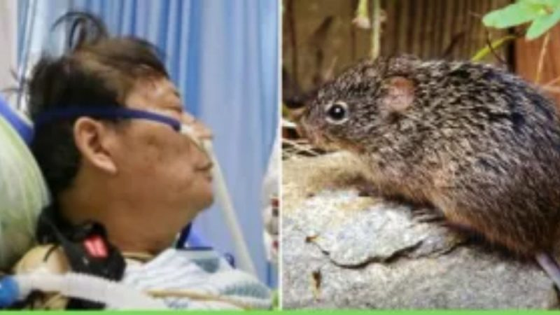 Man dies of hantavirus in China: report